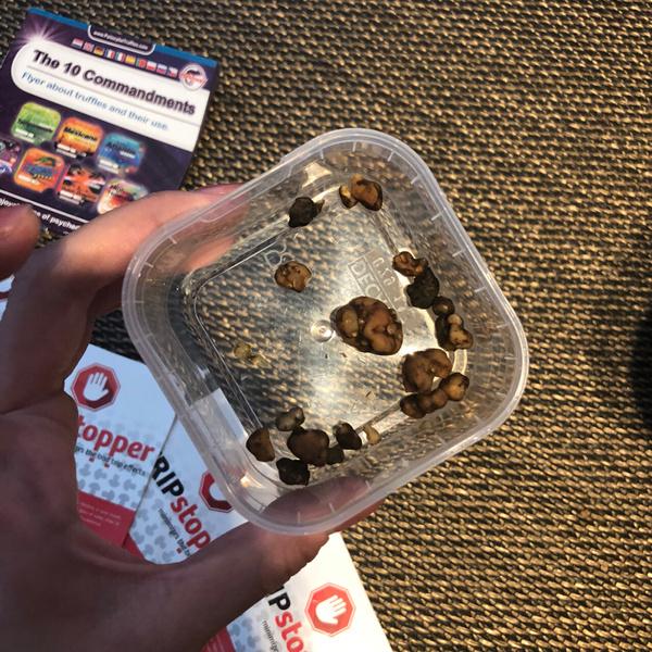 荷蘭迷幻蘑菇10.jpg